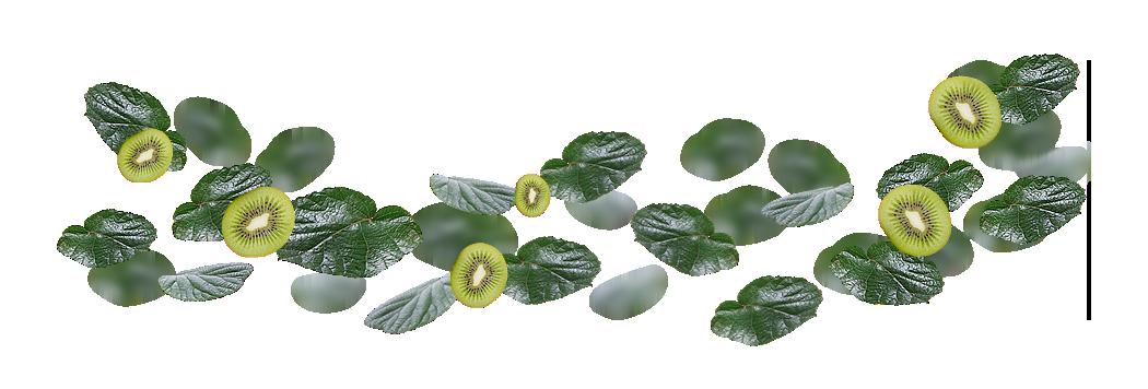 Kiwi Arguta